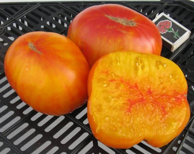 Полюбившийся большинству дачников — томат иваныч f1: описание сорта и характеристики