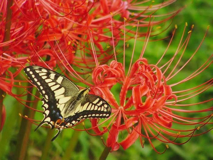 Как пересадить и размножить лилию в саду – пошаговый мастер-класс с фото