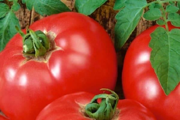 Описание сорта томата Главный калибр f1 и его характеристики