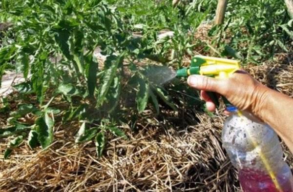 Трихопол и метронидазол для огурцов: рецепты растворов и обработка