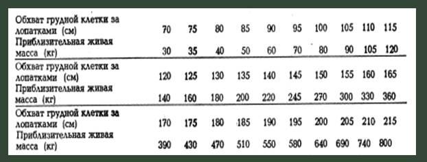 Сколько весит лошадь — категории веса животных и формулы определения массы тела