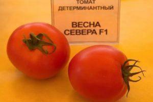 Сорт томата «корнеевский»: описание, характеристика, посев на рассаду, подкормка, урожайность, фото, видео и самые распространенные болезни томатов