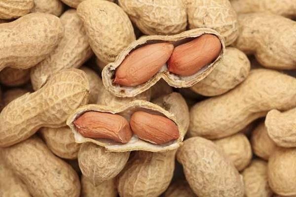 Как и при какой температуре хранить арахис в домашних условиях