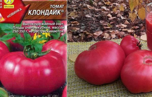 Сорт томатов клондайк