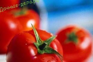Сладкий подарок любителям томатов — медовое сердце, описание сорта и его характеристики