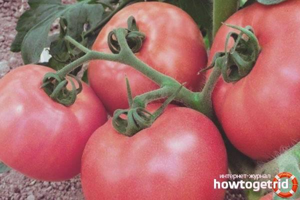Декоративный сорт томата «жемчужина желтая»: фото, видео, отзывы, описание, характеристика, урожайность