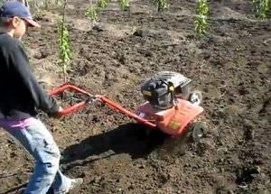 Необычные способы выращивания огурцов от наших читателей