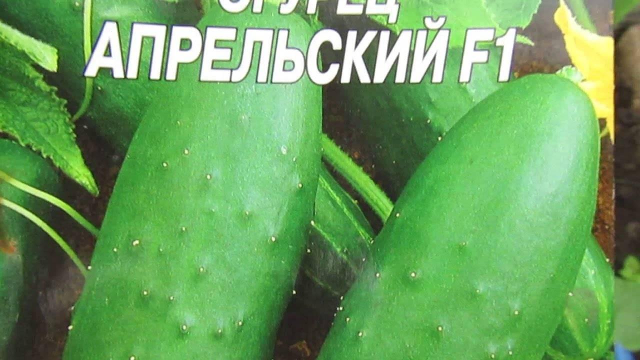 Огурец «апрельский f1»: описание с фото и отзывы
