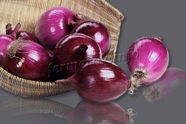Описание сорта лука Ред Барон, его характеристика и выращивание