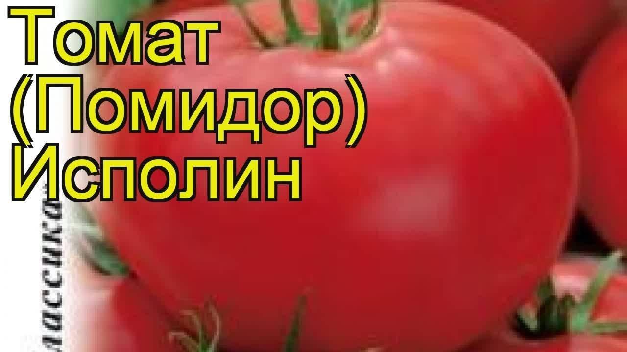 Томат гигант новикова: характеристика и описание сорта, урожайность с фото