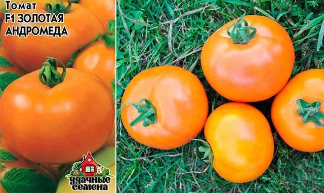 Томат андромеда: отзывы, фото, урожайность, характеристика и описание сорта, достоинства и недостатки