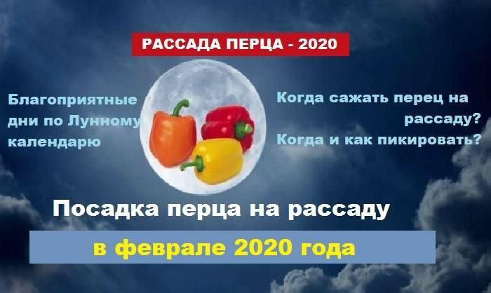 Благоприятные дни для высадки рассады перца в открытый грунт в 2020 году