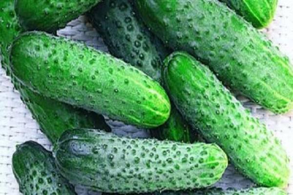 Гибрид огурцов «ухажер», пригодный для выращивания в неблагоприятных условиях