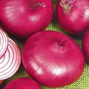 Описание крымского (ялтинского) лука и выращивание в средней полосе