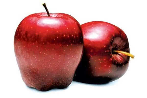 Яблоня Рихард: описание сорта и характеристики урожайности с фото