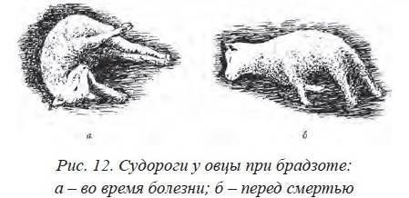 Анаэробная дизентерия телят