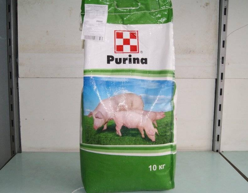 Чем в домашних условиях кормить свиноматку после опороса, чтобы было больше молока