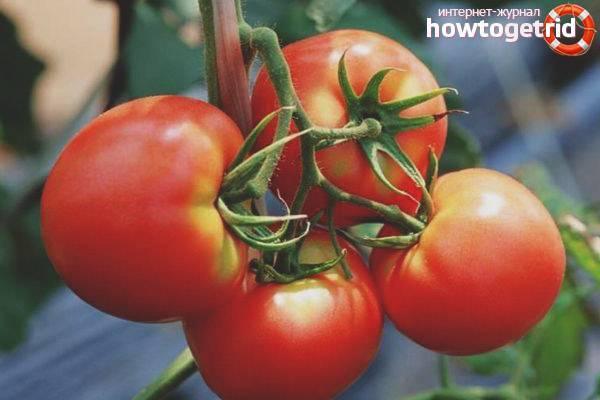 Томат тонопа f1: характеристика и описание сорта, урожайность с фото