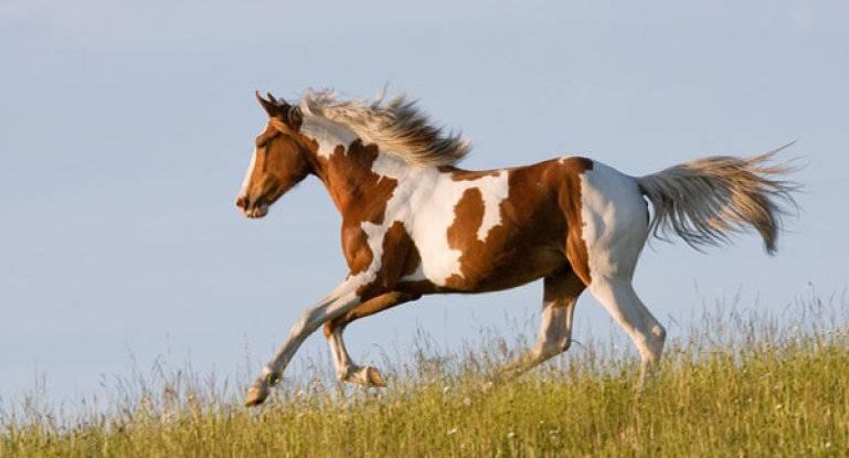 Максимальная скорость лошади. рекорд на скачках