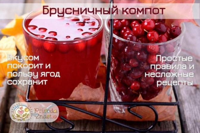 Брусничный компот: рецепт и фото
