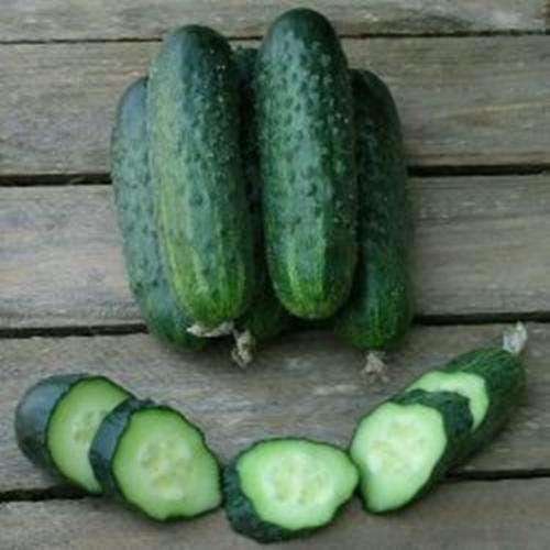 Сорт огурцов спино: как правильно выращивать и получить хороший урожай?