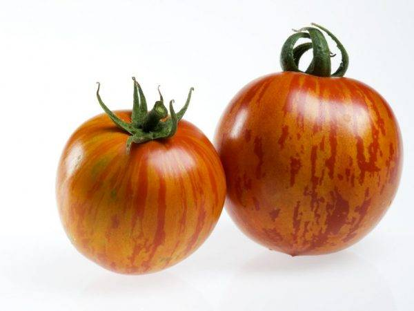Томат дон жуан — описание и характеристика сорта