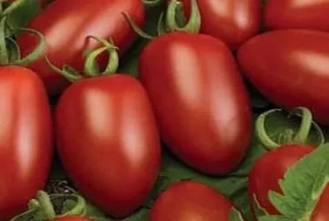 Мелкоплодный и вкусный — томат детский сладкий «сливка»: описание сорта и его характеристики