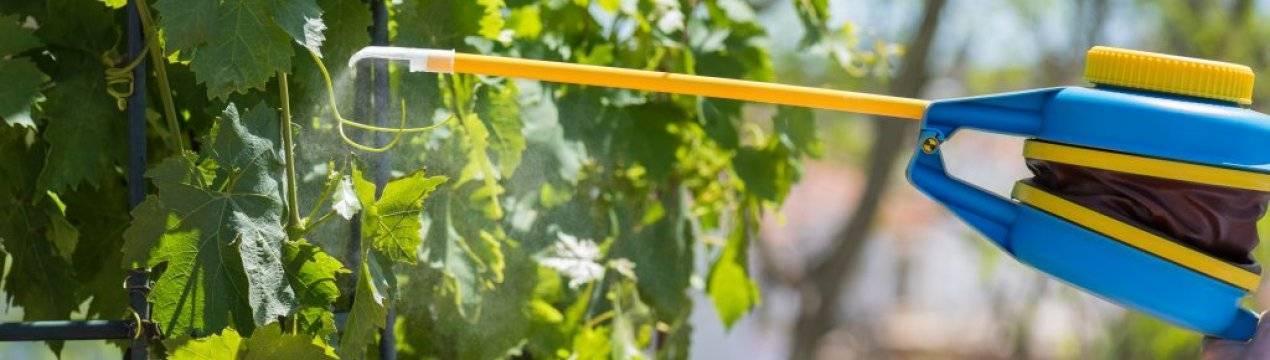 Как правильно полить огурцы содой и какую пользу это принесет урожаю