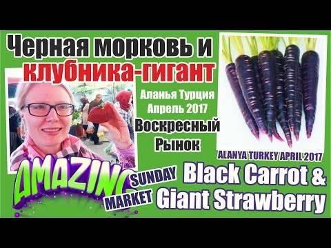 Полезные свойства и выращивание черной моркови