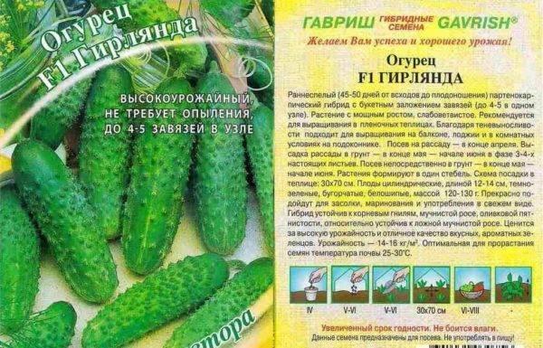 Описание сорта огурца Гирлянда f1, рекомендации по выращиванию и уходу