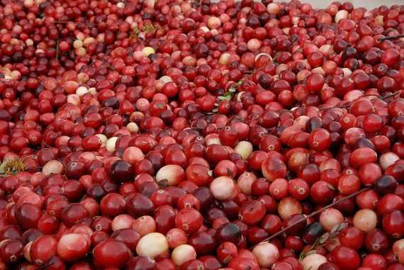 Пошаговые рецепты варенья из брусники с яблоками на зиму, пятиминутка с сахаром и без