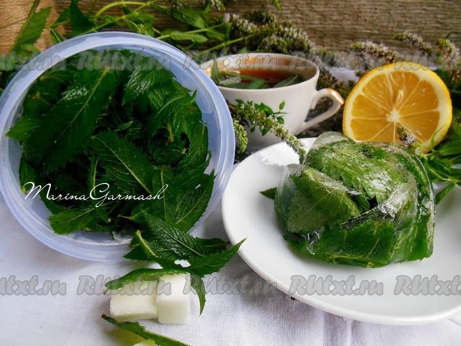 Советы хозяйкам, как хранить мяту, чтобы сберечь её вкус и полезные качества