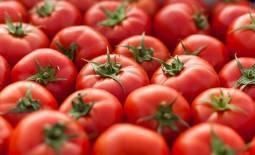 Томат ядвига: характеристика и описание сорта, выращивание с фото