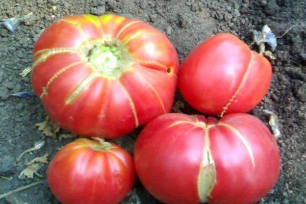 Любимый многими томат «подарочный»: описание и особенности сорта