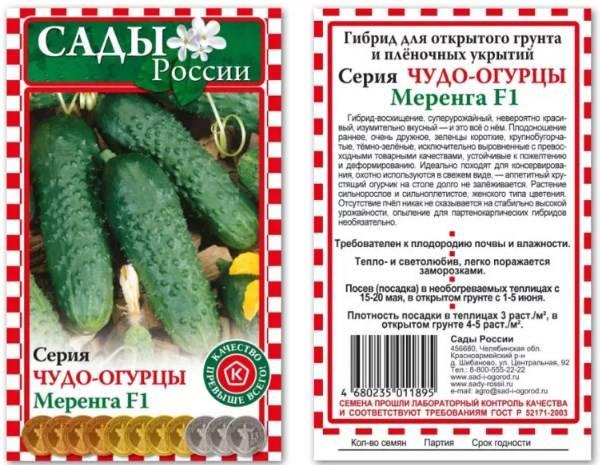 Как подготовить семена огурцов к посадке в открытый грунт и теплицу