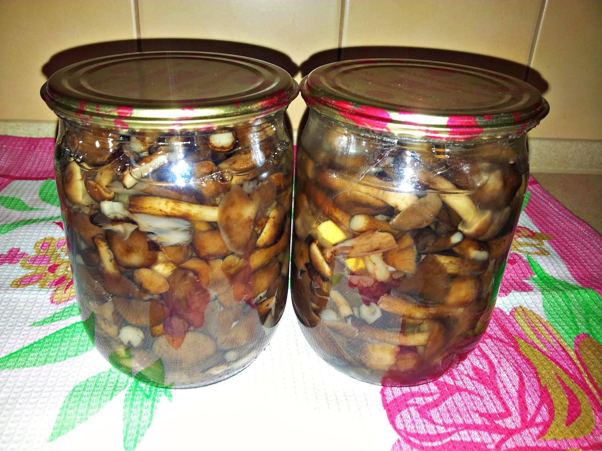 Маринованные опята на зиму: простые рецепты вкусных грибов с уксусом и без