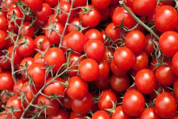 Описание томата сорта Хоровод, его характеристика и выращивание