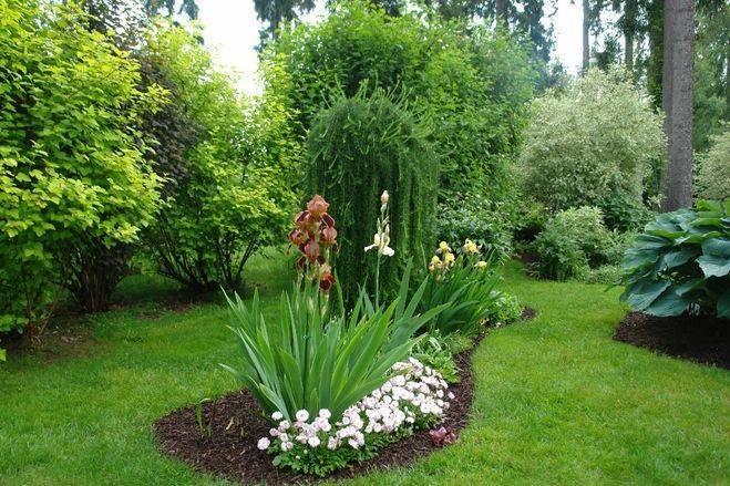 Короли июньского сада в его дизайне: что посадить рядом с пионами