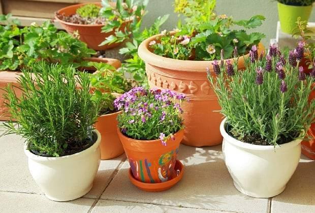 Виды удобрений для подкормки гладиолусов летом, выбор и периодичность