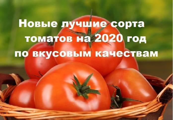 Гибрид помидора «настя сластена f1»: фото, отзывы, описание, характеристика, урожайность
