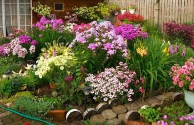 Как посадить лилии, чтобы на участке они смотрелись красиво