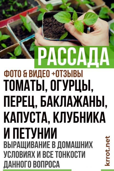 Как собрать семена огурцов в домашних условиях своими руками?