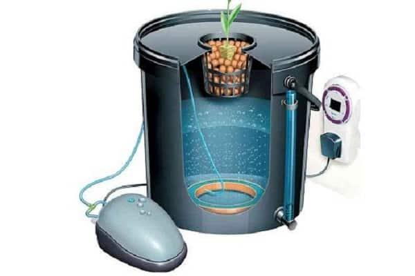Огурцы на гидропонике: выращивание в домашних условиях
