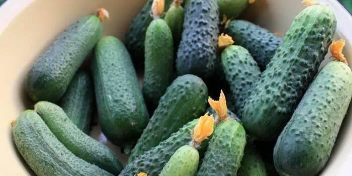 Лучшие сорта огурцов для сибири и особенности их выращивания