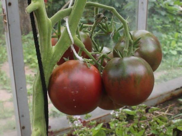 Обзор томата «крайний север»: инструкции по выращиванию