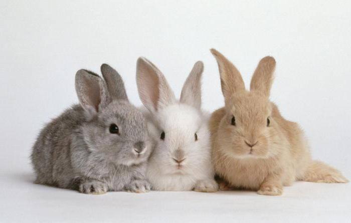 Вес кролика по месяцам