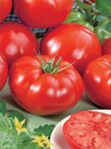 Томат султан: характеристика помидоров, отзывы и урожайность с фото