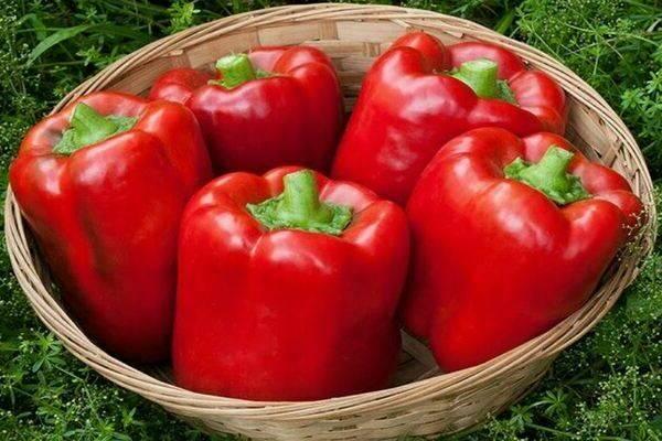 Все особенности сладкого перца «калифорнийское чудо», отзывы огородников об этом сорте