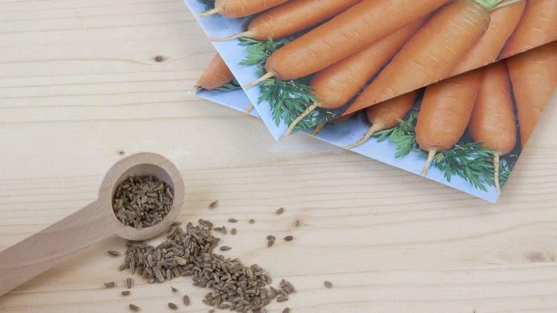 Как посеять морковь, чтобы потом не прореживать: советы и хитрости для дачников