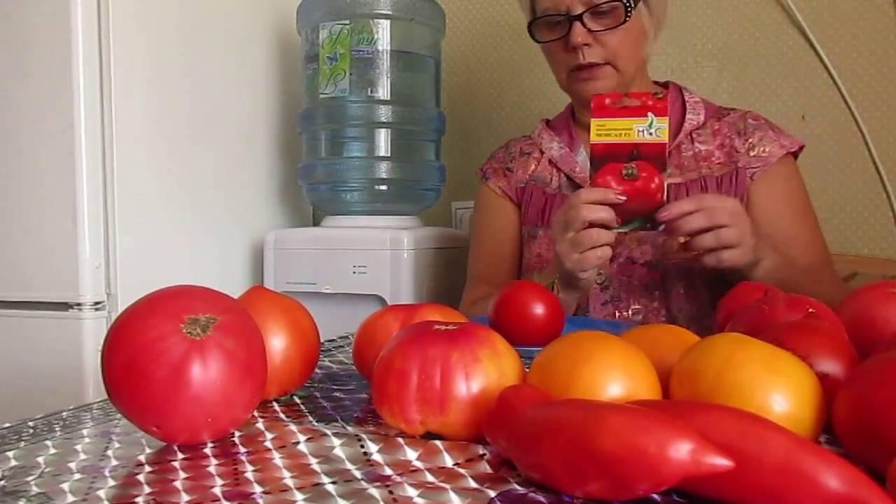 Любимец многих — томат «дачник»: характеристика и описание сорта, фото